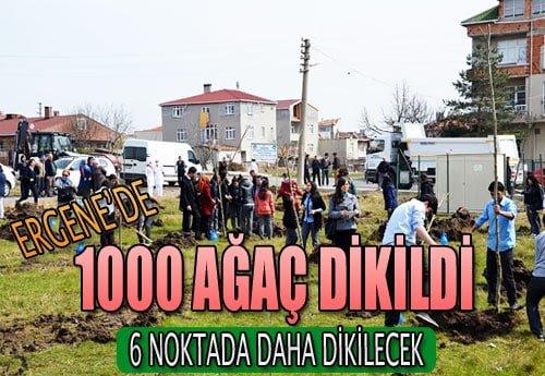ergene_agac_dikildi